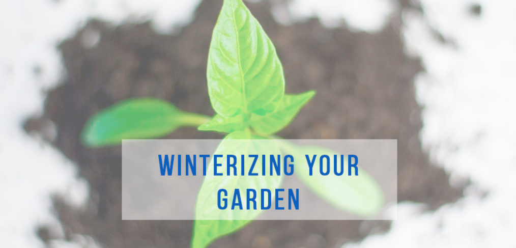 Prepare your garden for winter in Alaska | Gardens in Alaska